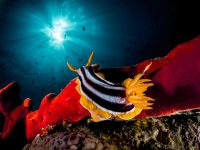 מיצרי טיראן וראס מוחמד – 3 ימי צלילה 16-19 באוגוסט