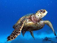 ראס מוחמד ומיצרי טיראן – 4 ימי צלילה – 26-30 בספטמבר – סוכות