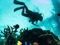 טיראן וראס מוחמד - 3 ימי צלילה - 7-10 ביוני