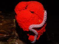 טיראן וראס מוחמד – 3 ימי צלילה – 5-8 באוקטובר